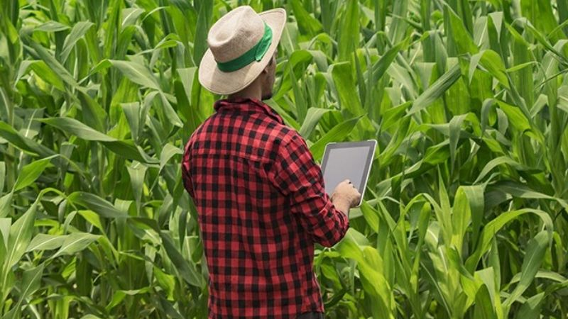 IoT for farmer